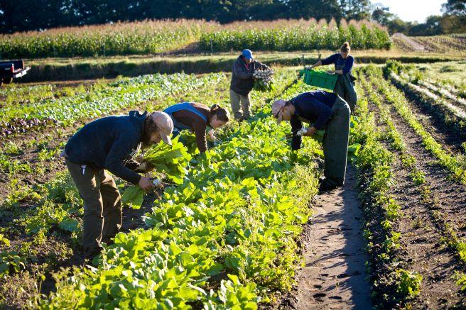 PIX DELETE FARM FAMILY 2 1 2018